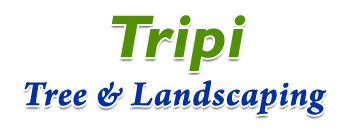 Tripi Tree & Landscaping